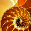 spiral_shell