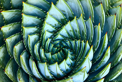 Deepening_Cactus